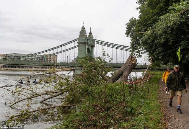 A tree next to Hammersmith Bridge in west London has been blown down overnight after the Met Office issued a Yellow weather warning for high winds and heavy rain for the weekend