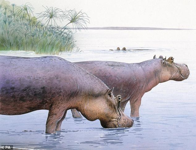 Astonishingly little is known about the fauna and flora that lived in Britain between 1.8 – 0.8 million years ago – a critical period when early humans began to occupy Europe.  Image: Artist's impression of Hippo in Norfolk