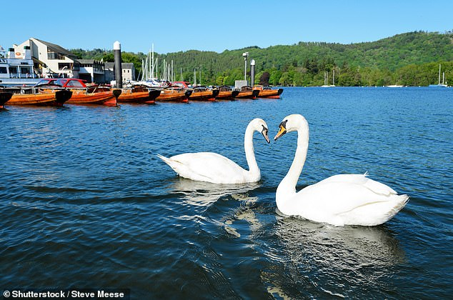 , Lake Windermere could become 'ecologically dead' due to amount of sewage pumped in, study warns, The Today News USA