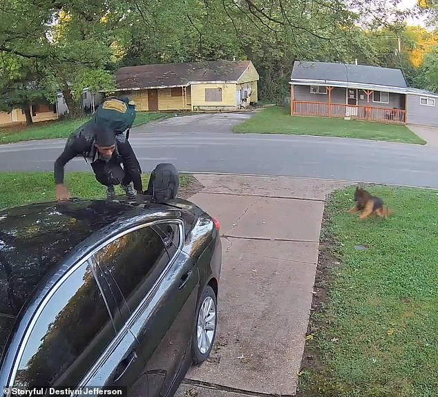 Leap of faith! The man fleeing the dog jumps up on the roof of a stranger's car for safety