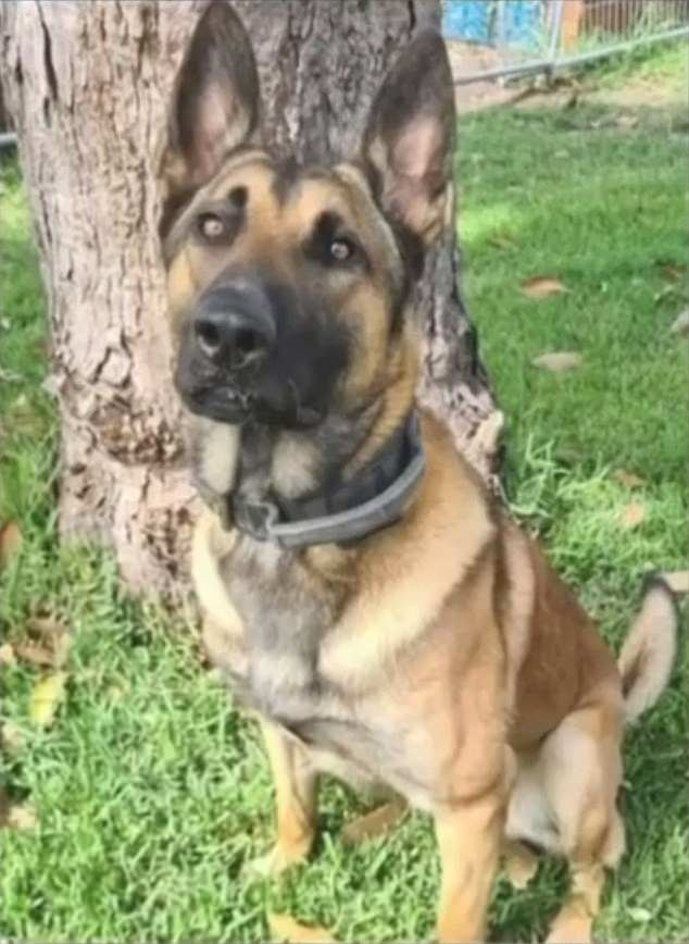 , Yowie Bay, Sydney: Shannon De Waard's home vandalised after he allegedly killed a german shepherd, The Today News USA