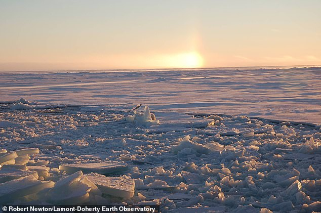 The Last Ice Area, where sea ice traditionally remains frozen year round, has lost 40 percent of its area since the early 1980s
