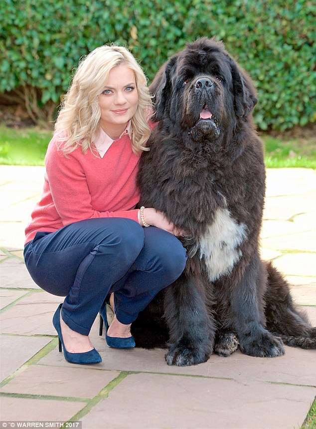Owner Lizzie, weighs 10st, but Murphy weighs a whopping 12st. She described him as a 'big teddy bear' and said: 'There's only one boss in our house — Popcorn, our cat'
