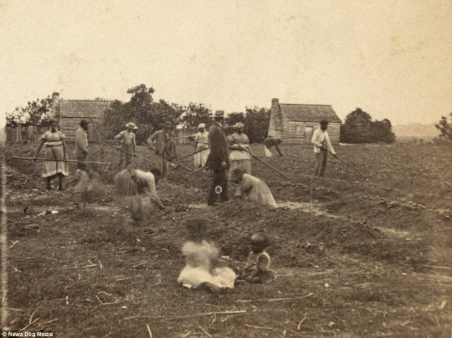 Children and their families - all freed African-Americans - continue to work on a plantation, doing exactly the same work they did as slaves, despite being liberated. This picture was taken in Saint Helena Island, South Carolina around 1863
