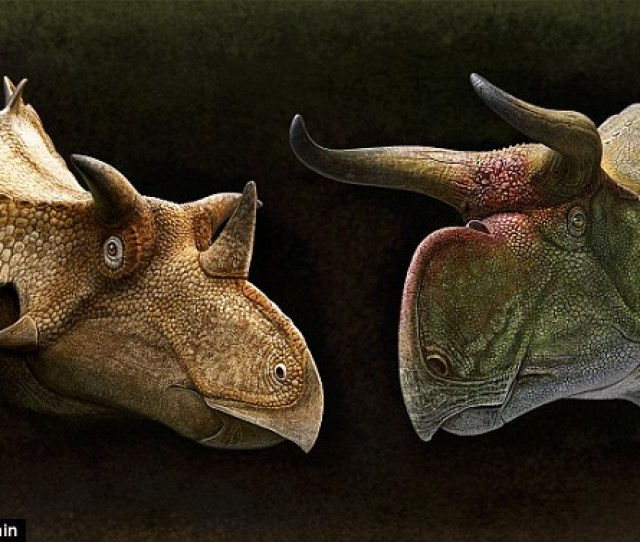 Triceratops Used Its Terrifying Horns To Attract Sexual Partners