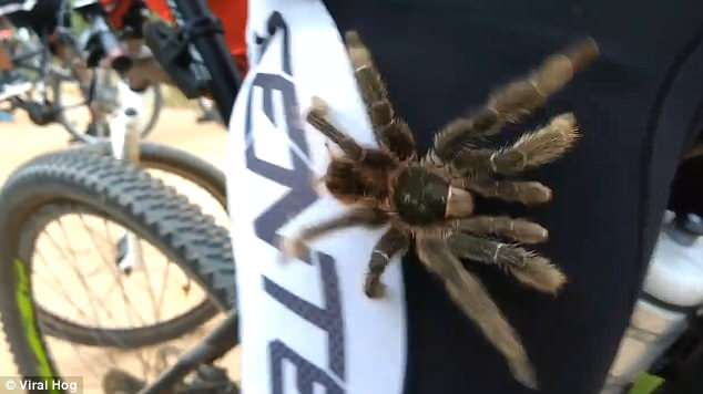 Suddenly The Spider Crawls Back Down The Same Leg And Runs Back Towards The Woods