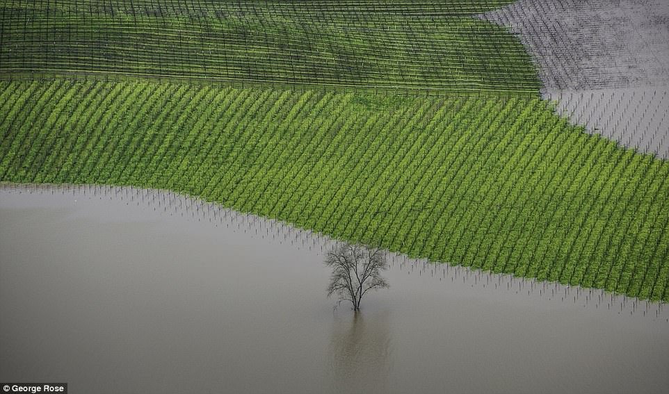 American photographer George Rose won in the Errazuriz Wine Photographer of the Year - Places category for his devastating image of a vineyard flooding in Sonoma County, taken from a helicopter