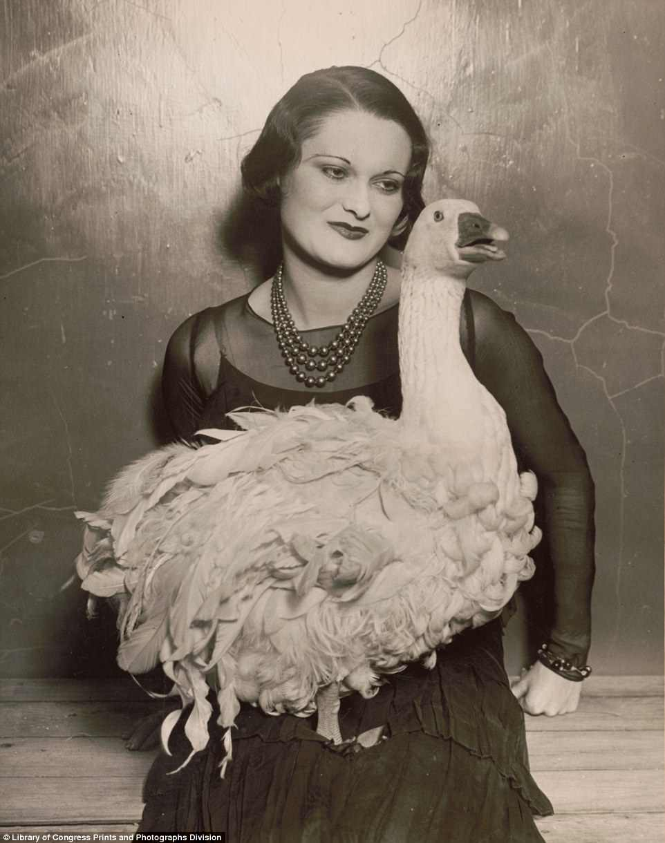 The above image shows ¿Floradora goose¿ at the 41st annual Poultry Show in Madison Square Garden, New York in 1930