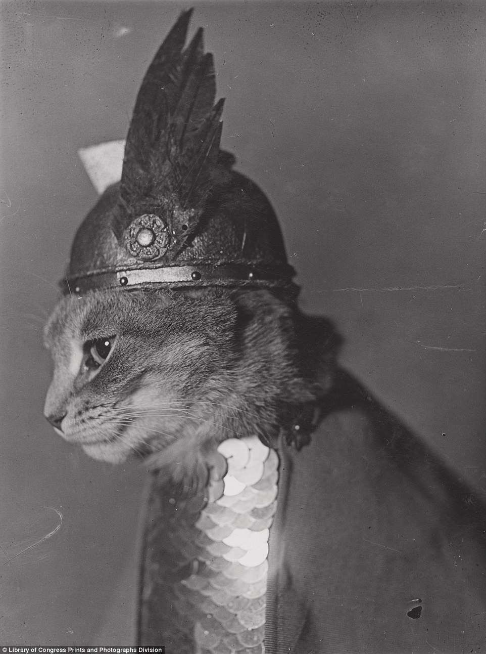 There's also that reliable photo standby, the funny cat picture. This one, taken in 1936, features an annoyed-looking feline dressed to resemble the female warrior Brunhilde