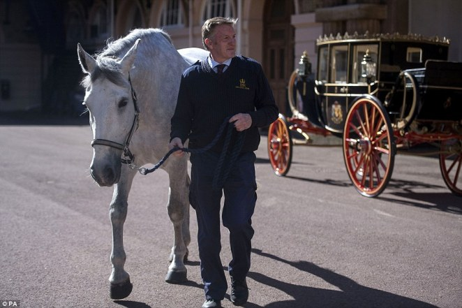 Philip Barnard-Brown, senior coachman at the Buckingham Palace Mews, leads a Windsor Grey past the Scottish State Coach