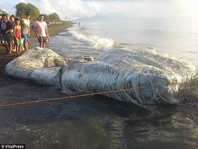 Residents inspect the unidentified hairy blob which washed up in the town of San Antonio in Oriental Mindoro province, Philippines