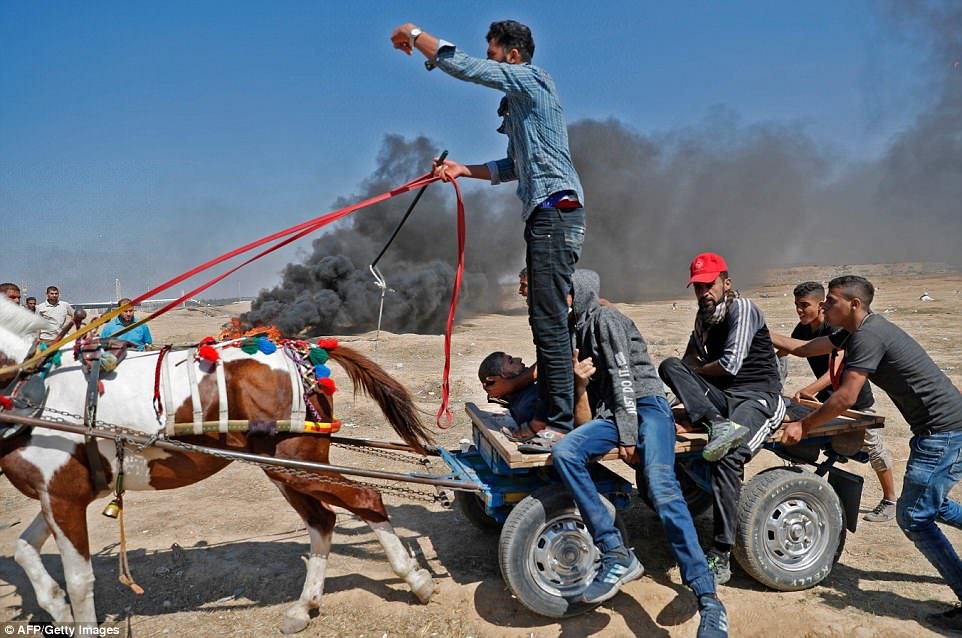 Protesters used a horse and cart as they carried wounded Palestinians away from the conflict this afternoon as it emerged at least 37 had been killed and hundreds more injured