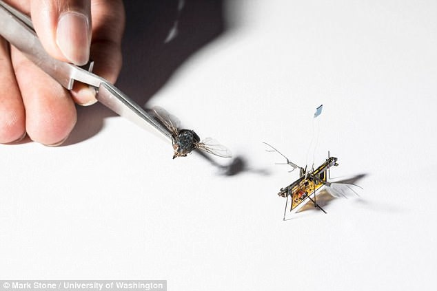 RoboFly is only slightly heavier than a toothpick and powered by an integrated circuit that converts the laser energy into enough power to operate its wings
