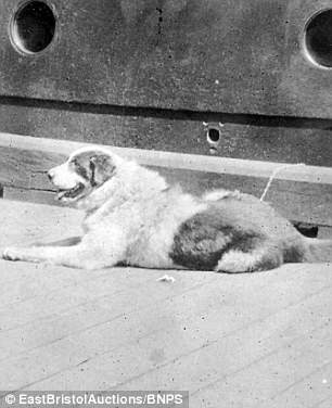 Shackleton's animals also made it back to civilisation after the Endurance ship became trapped in ice