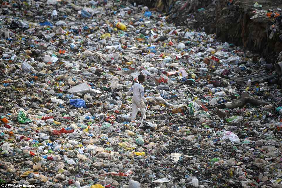 Taimur Nagar's residents know little of the hazards of non-biodegradable plastic to the water supply and the animals sat around