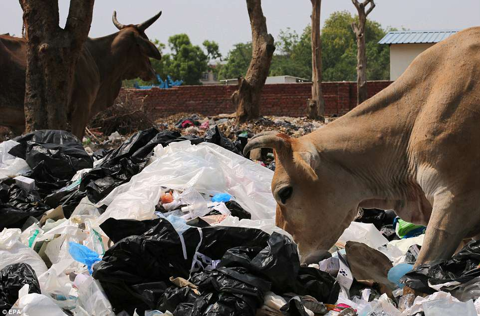 India generates around 5.6 million tonnes of plastic waste annually, according to government figures, with Delhi among the worst cities for plastic consumption