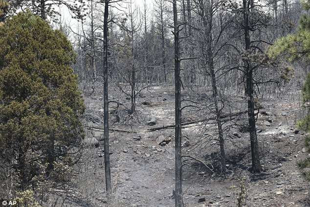 This photo from Saturday shows the results of a previous back burn to keep the the wildfire from advancing towards homes along County Road 201 near Hermosa