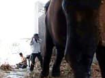 Dieses schockierende Video zeigt einen Elefantenhändler, der gnadenlos einen Elefanten in Indien schlägt