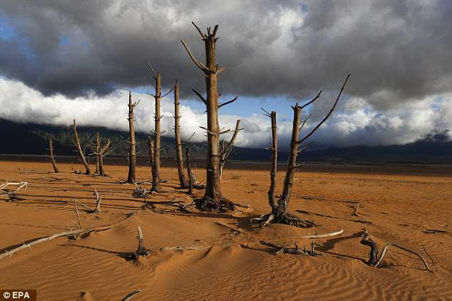 Tree trunks, which were submerged when the dam was full, stand in Theewaterskloof Dam in January 2018. It is the single biggest dam supplying water to Cape Town