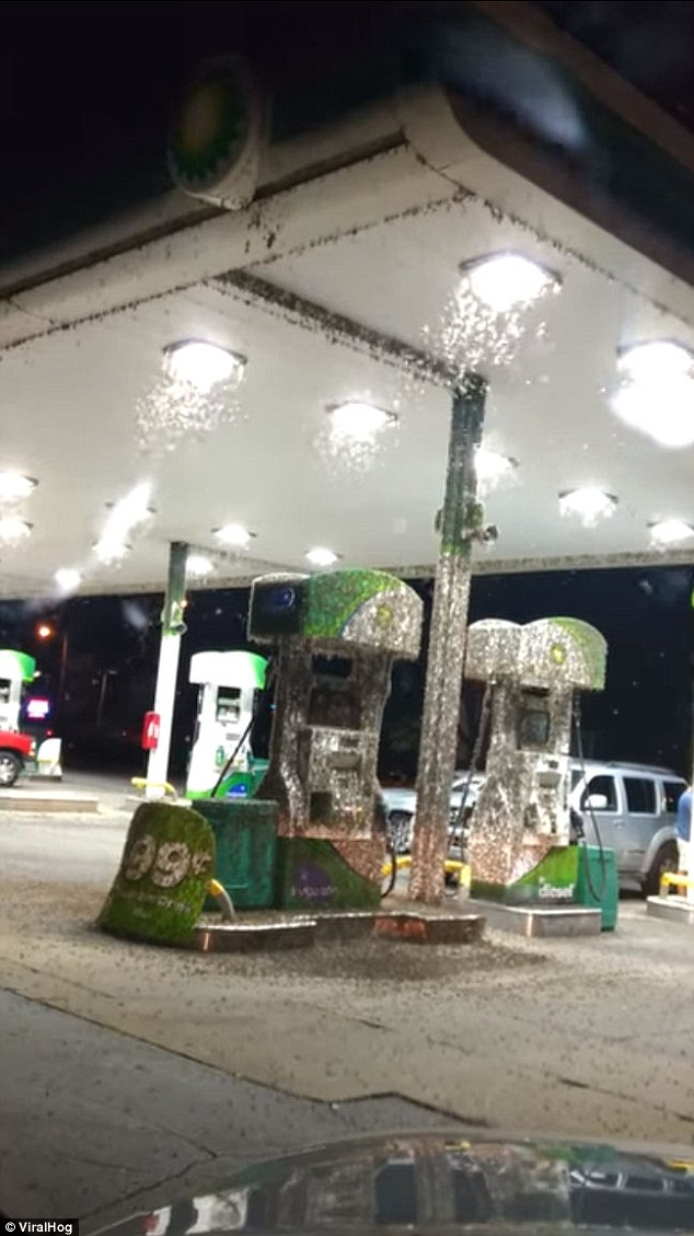 The man in the video  braved the infestation and pumped his gas among the bugs, like a champ
