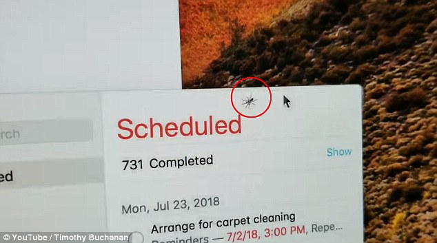 Timothy Buchanan took to YouTube to show the world the spider (circled in red) he discovered stuck between the glass and display of his computer monitor