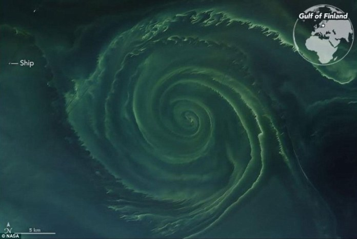 On July 18, 2018, the Operational Land Imager (OLI) on Landsat 8 acquired a natural-color image (above) of a swirling green phytoplankton bloom in the Gulf of Finland, a section of the Baltic Sea. Note how the phytoplankton trace the edges of a vortex; it is possible that this ocean eddy is pumping up nutrients from the depths. For scale, a ship is shown.The swirling bloom is at least 15 miles across, which means New York City's Manhattan Island could fit inside it with a little room to spare.
