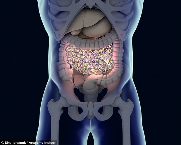You are what you eat: Consuming probiotics can dramatically change your health, he says