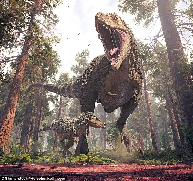 Tyrannosaurus DNA would have been the same as modern birds, according to a new study. Scientists have revealed that dinosaurs may have come in such different shapes and sizes because their genetic code had a large number of chromosomes (stock image)