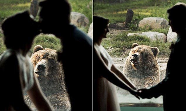 Bear Hilariously Photobombs Couples Wedding Photos