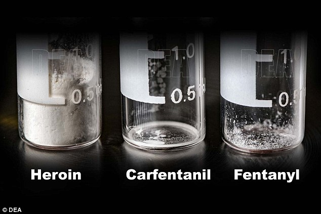 Carfentanil is 100 times stronger than fentanyl, which is 100 times stronger than heroin