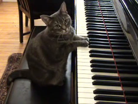 Image result for cat piano