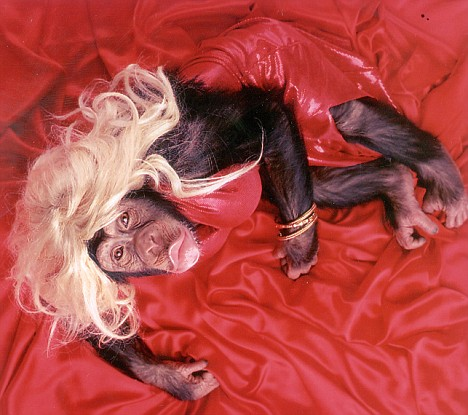 Chimp in ladies clothes