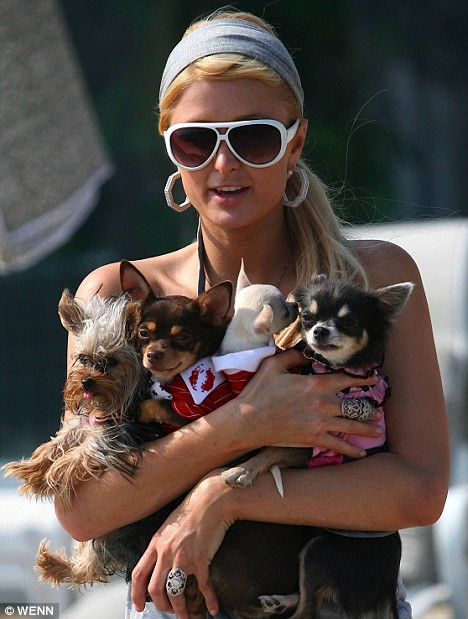 Paris Hilton and her pooches!