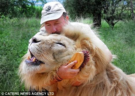 Alex Larenty hugs Jamu the lion
