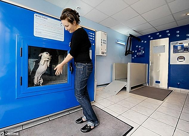 The dog owner pushes start on the Dog' O' matic doggy washing machine