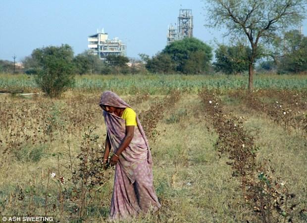 Farm worker Radha in the cotton fields beneath Gujarat Fluorochemicals