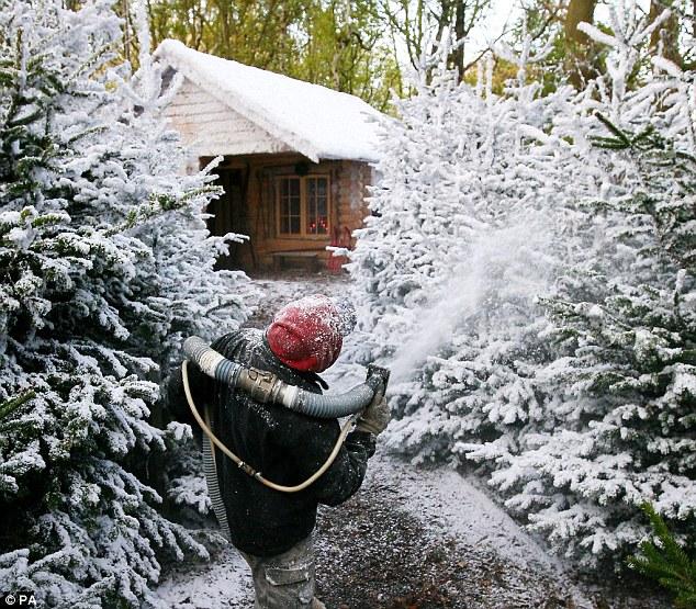Narnia Winter Wonderland