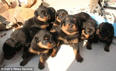 ¡Cachorritos!