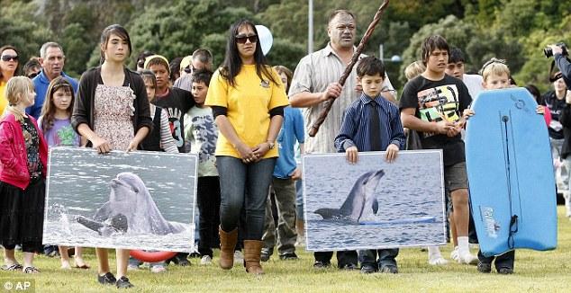 Moko the dolphin
