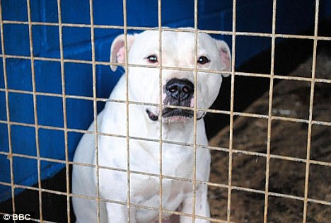 Shocking statistics: Battersea Dogs Home has admitted killing 2,815 dogs last year