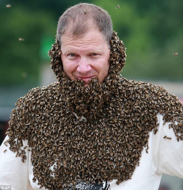 kompetisi bee beard