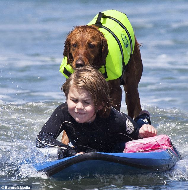 Richochet, the surfing dog helps brain-injured Ian McFarland, 6, surf off the coast of Del Mar in California. The labrador helped raise £5,000 for the boy's treatment