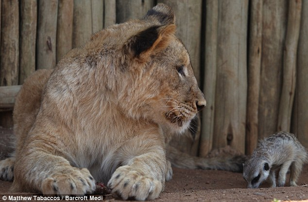 Best of friends: The unlikely duo became inseparable after they  met when Zinzi was just one day old and have remained firm friends ever  since