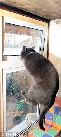 Aksi Pepper membuka jendela.