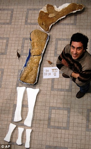 Huge: Octavio Mateus with part of a forelimb of the fossilised dinosaur. It is thought to be one of the largest creatures ever to walk on Earth