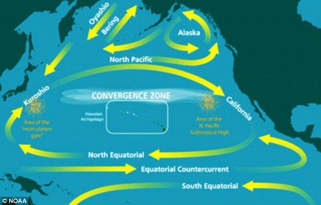Strong: The graphic shows the currents in the Pacific Ocean that will push the debris around from Japan to the U.S. West Coast and back again