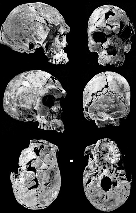 Bigger brain: Six different views of a 160,000-year-old human skull of an adult male from Ethiopia