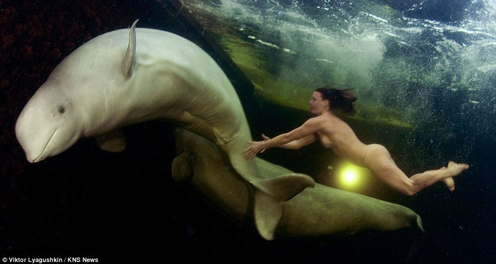 The beauty of nature: Like a scene from a classic pre-Raphaelite painting, naked Natalia Avseenko swims with beluga whales in the Arctic