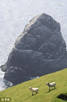 Wildlife: Boreray is known for its biodiversity as well as cultural heritage, both recognised by Unesco