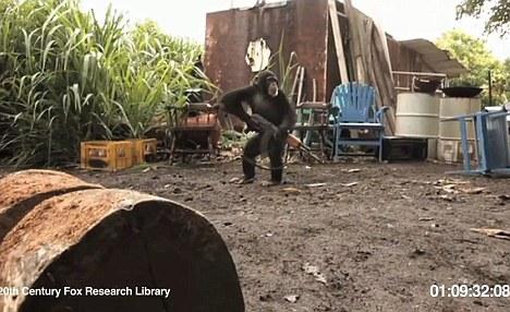 Las advertencias han eco de la subida de la nueva película de El planeta de los simios, en el que los científicos que buscan una cura de Alzheimer ¿s crear un nuevo tipo de simio con la inteligencia humana